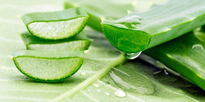 5 Other Amazing Uses of Aloe Vera